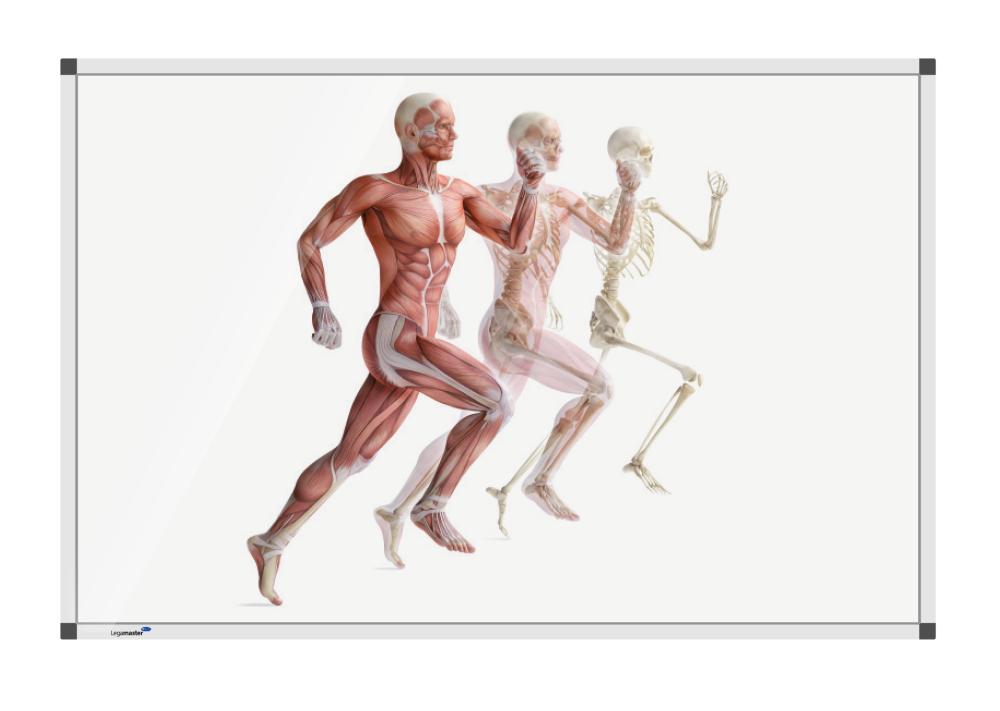 Hardlopende anatomieman 120x180 cm